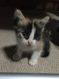 最初のころの猫